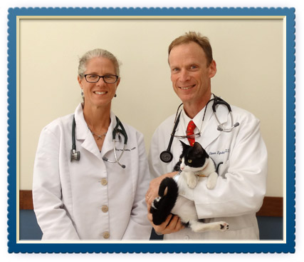 About our Animal Hospital in Charlottesville, VA