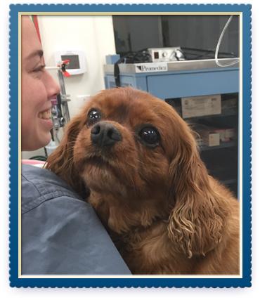 Wellness services charlottesville veterinarian ivy square pet care solutioingenieria Choice Image